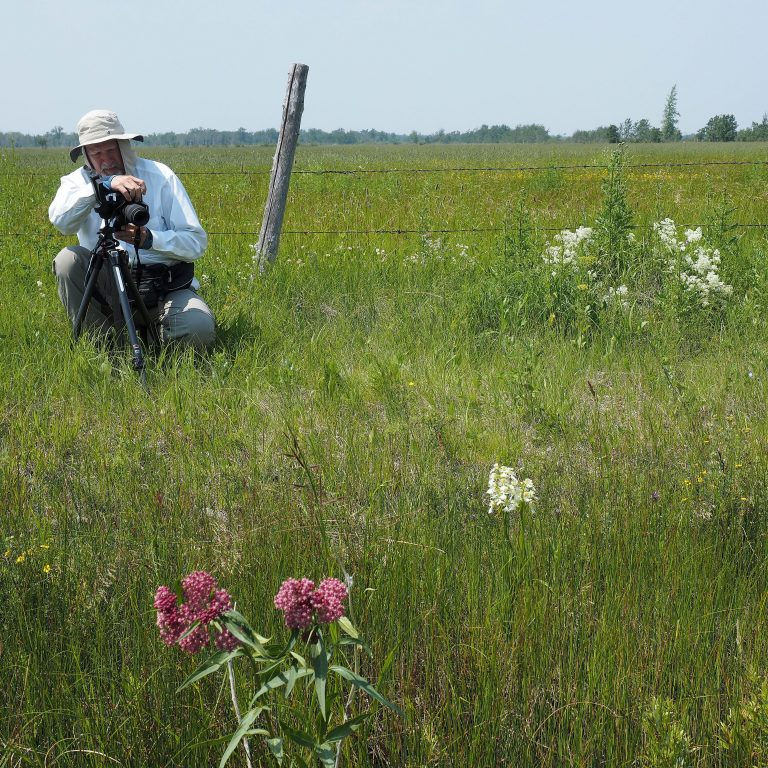 Jim photographs Western Prairie Fringed orchid at the Nature Conservancy Tall Grass Prairie Project near Stuartburn in southeastern Manitoba. July 12, 2014. Photo by Walter Ezell.