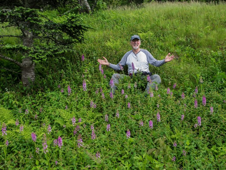 Jim Fowler in a bank of Small Purple Fringed orchids below the restaurant at Mount Mitchell State Park. June 23, 2017. Photo by Walter Ezell.