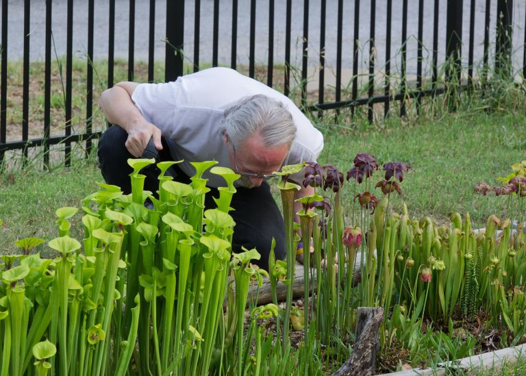 Jim inspecting his bog garden in Greenville, SC on May 9, 2011. Photo by Walter Ezell.