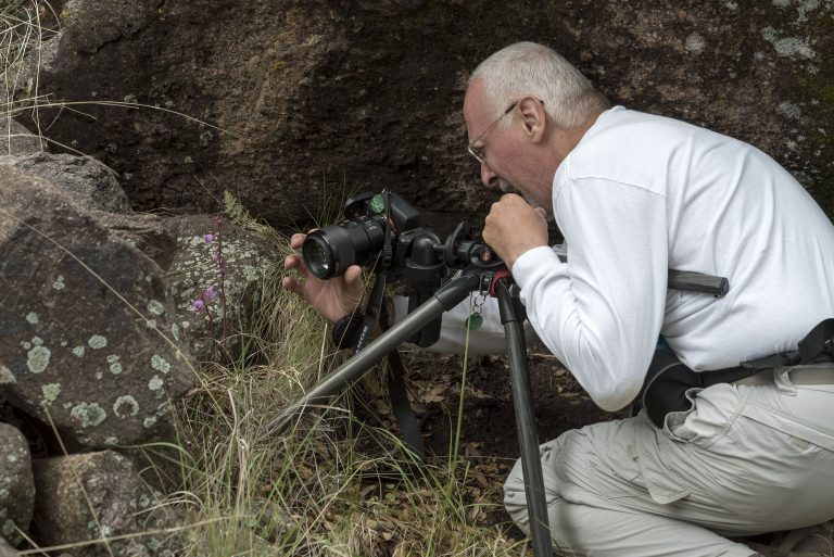 Jim Fowler squeezes next to a boulder to focus on a Hexelectis grandiflora in the Davis Mountains in western Texas. July 13, 2018. Photo by Walter Ezell.
